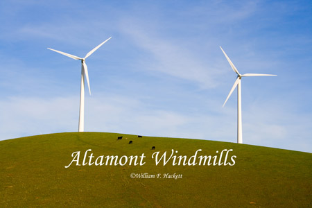 Altamont Windmills and cattle, California