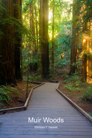 Muir Woods Walkway, Muir Woods, California