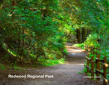 Redwood Regional Park, East Bay, California