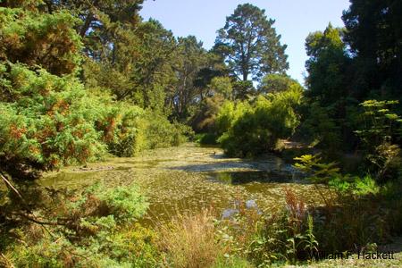 Lily Pond, Golden Gate Park