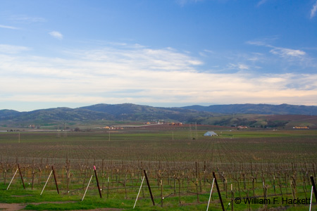 Livermore Vines, Tesla Road
