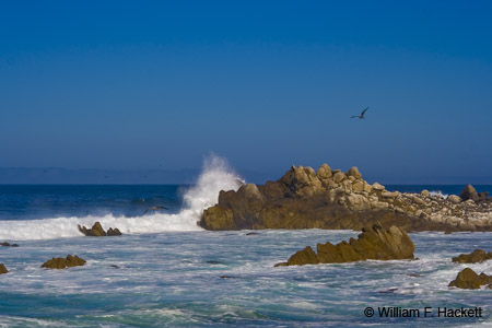 Pacific Grove, CA, Shoreline Flight